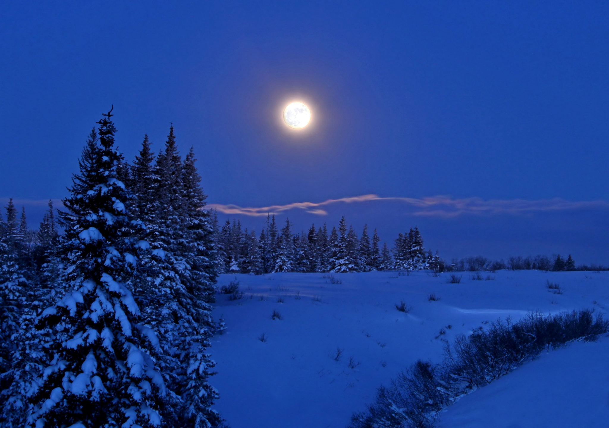 Full moon rising over a winter landscape in Alaska at night with spruce trees and snow.