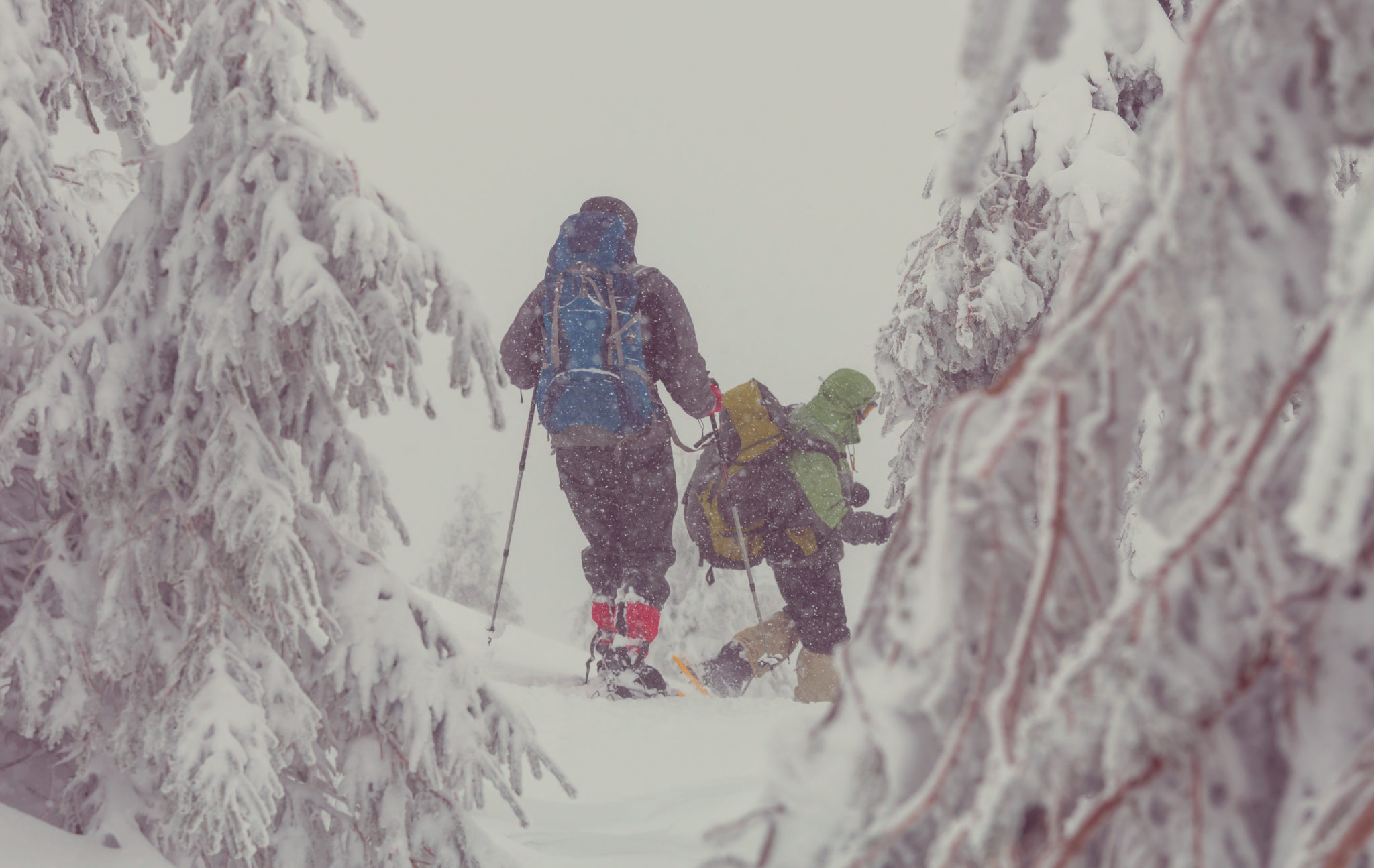 Snowshoeing - day and evening tours